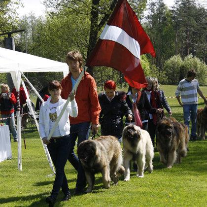 LATVIAN GOLDEN LEONBERGER 2011